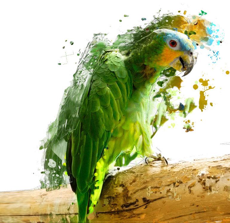Fine Art Printing Parrot